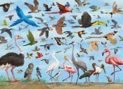 All The Birds Jigsaw Puzzle