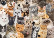 All The Cats 1,000 Piece Jigsaw Puzzle